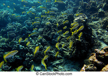 many yellow white fish