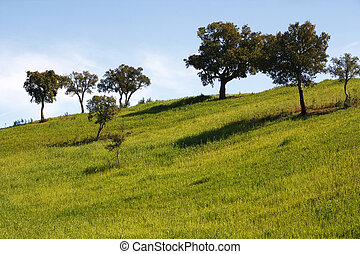 many young olm oak trees - View of some green and grassy...