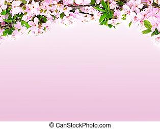 manzana, flores, rama, en, un, fondo rosa