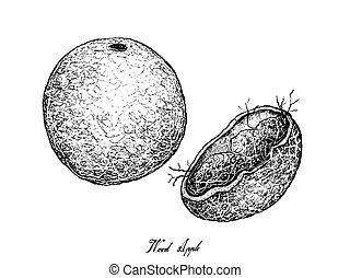 manzana, mano, madera, plano de fondo, dibujado, blanco