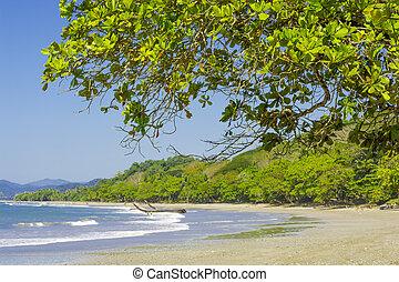 manzanillo, costa, playa, rica