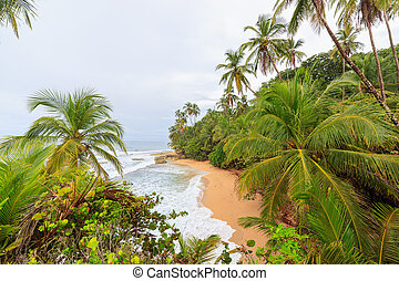 manzanillo, idyllic, praia, costa rica