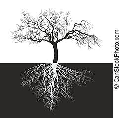 manzano, sin, hojas, con, raíz
