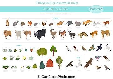 map., 植物, 自然, 鳥, apine, 動物, 地域, ツンドラ, biome, 地球である, デザイン, 等大...