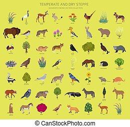 map., aves, animales, biome, conjunto, estepa, terrestre, ...