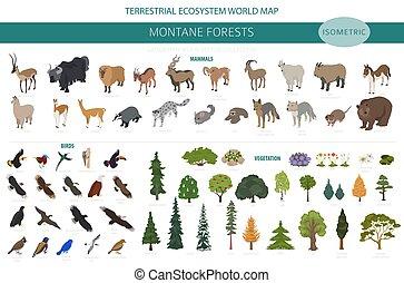 map., montane, naturale, uccelli, animali, regione, foresta,...
