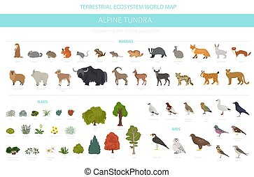 map., rośliny, kasownik, ptaszki, apine, zwierzęta, okolica...