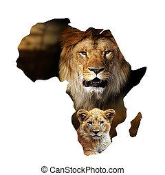 mapa, afryka, lisię lwa, portret, biały samczyk