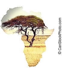 mapa, de, áfrica, continente, concepto, con, acacia