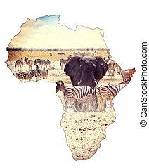 mapa, de, áfrica, continente, concepto, safari, en, waterhole, con, elefantes
