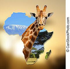mapa, dziewiczość, afryka, projektować