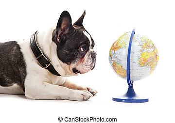 mapa, sobre, cão, fundo, mundo, branca