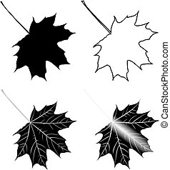 maple, Acer , vector, isolated maple leaf,