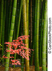 maple and bamboo
