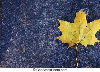 Maple autumn leaf on a granite slab