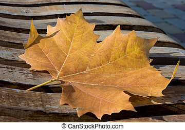 maple autumn leaf on an old bench