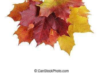 maple autumn leaves border