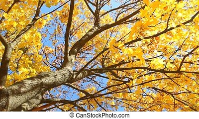 Maple autumn leaves on sky background