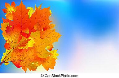 Maple bouquet against sky, autumn.