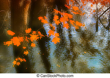 Maple branch with red autumn leaves against a background of water in a flooded forest