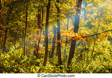 maple branch with yellow leaves in the autumn forest
