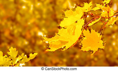 Maple branch with yellow leaves on fall background copy space
