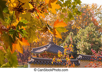 Maple branches with autumn leaves in Korean traditional garden, background