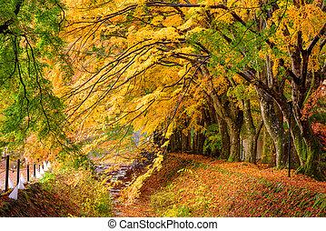 Maple Corridor near Kawaguchi Lake, Japan during autumn.