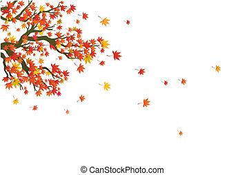 maple, em, a, outono