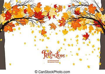 Maple fall trees