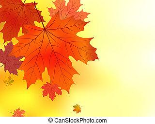 maple., foglie, rosso giallo