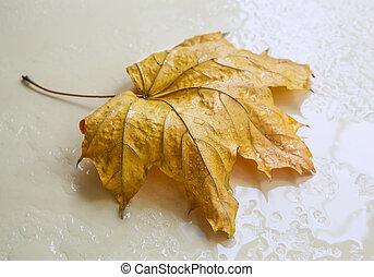 maple, gotas, folha, amarela, chuva