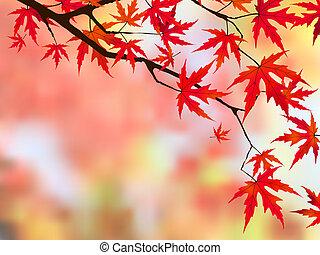 maple., japonaise