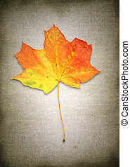 maple leaf against rough material background