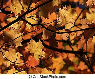 Maple Leaf Autumn Canopy