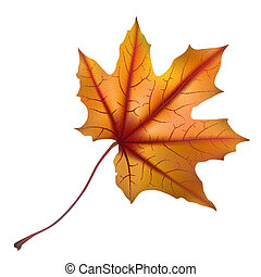 Falling autumn maple leaf on white, detailed and textured, vector illustration.
