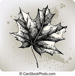 Maple leaf, hand-drawing. Vector il