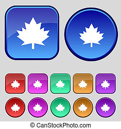 Maple leaf icon. Set colourful buttons. Vector