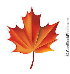 illustration drawing of red maple leaf isolate in white background