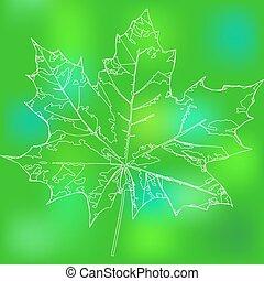 maple leaf - Eco badge of maple leaf.