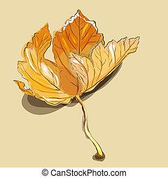 Maple leaf - Vector painting of maple leaf