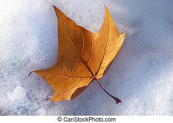 single sunny maple leaf on snow covered ground