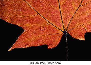 Maple leaf macro.