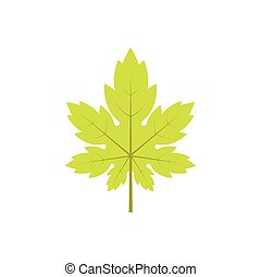 Maple leaf on a white background