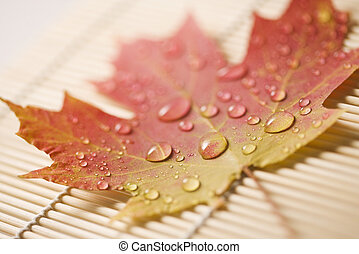 Maple leaf on bamboo mat. - Sugar Maple leaf in Fall color...