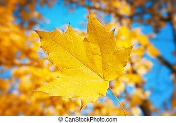 maple leaf on blue sky background