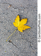 Maple leaf on road