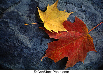 Maple Leaf Pair on Moody Grey Rock - Two sugar maple leaves...