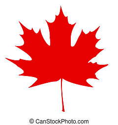 Maple Leaf - Red - Red maple leaf on a white background....