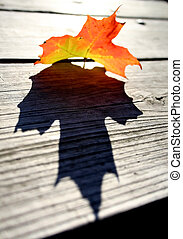 MAPLE LEAF - Single maple leaf on a bench with shadow